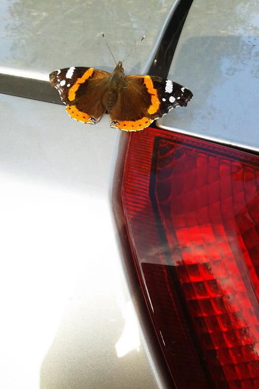 butterfly farfalla auto grigia rossa