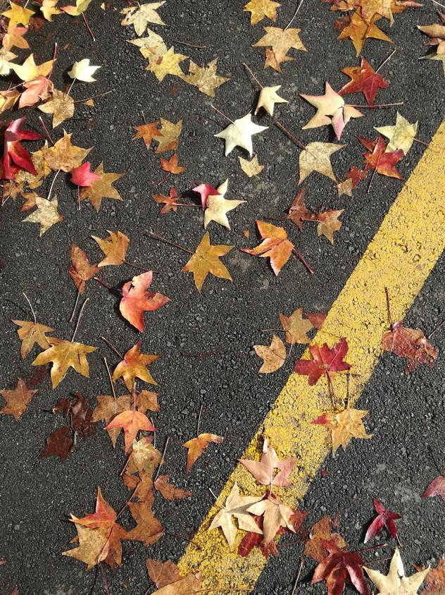 Foglie d autunno